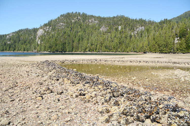 A traditional native American fish trap and weir located in British Columbia, Canada