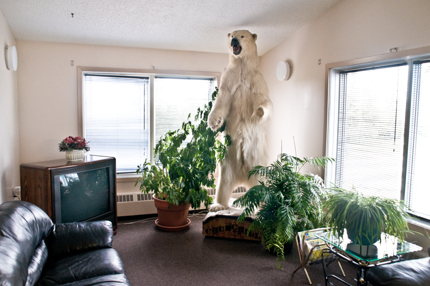 A stuffed polar bear standing in the lobby of a hotel in Churchill, Manitoba, Canada