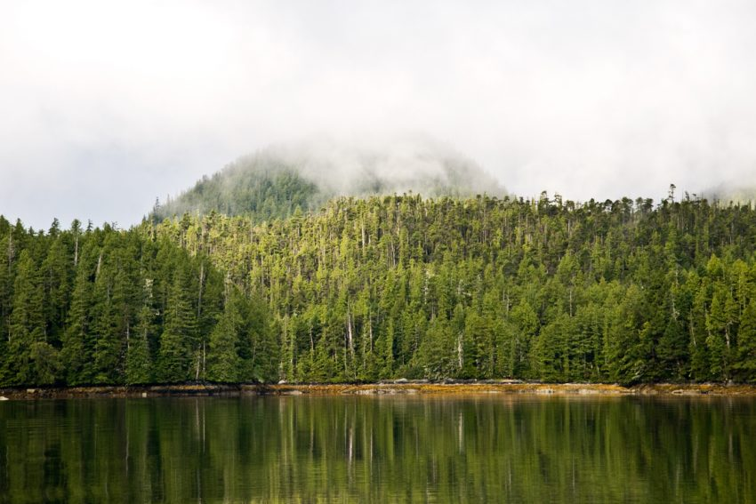 A forested hilltop in the Great Bear Rainforest, Canada.