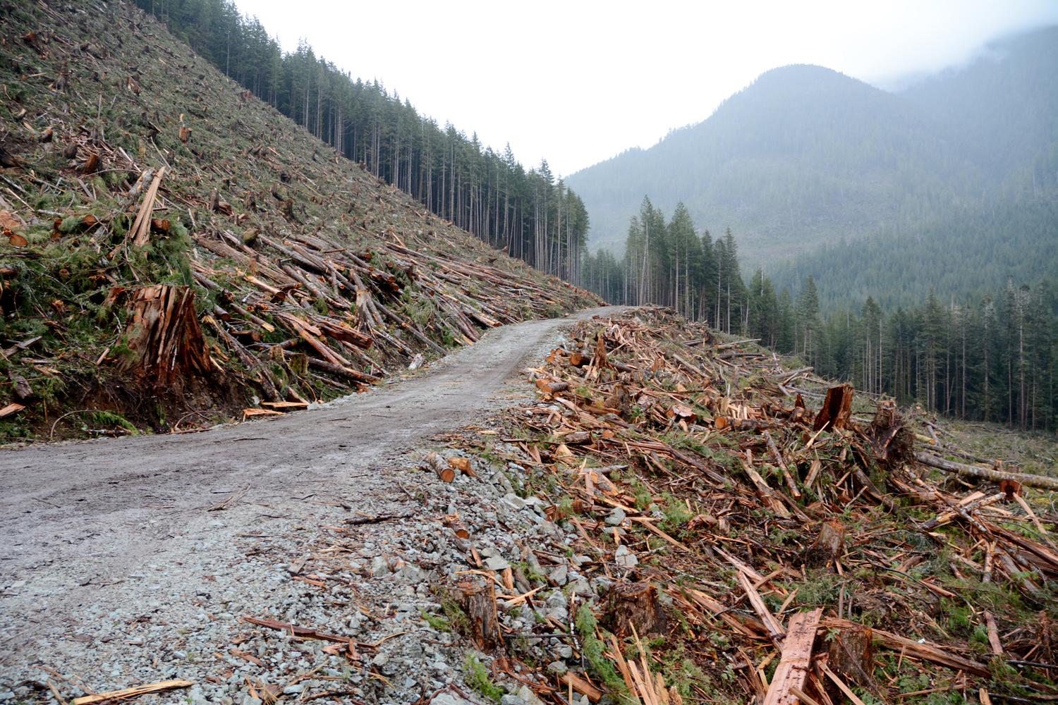 A clear-cut logging block on Vancouver Island, British Columbia, Canada