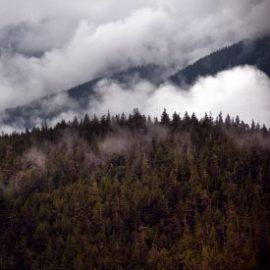 A photo of the Great Bear Rainforest by John Zada